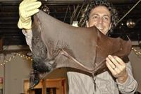 Mies Bat