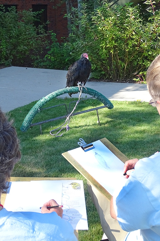 Two individuals sketching a raptor.