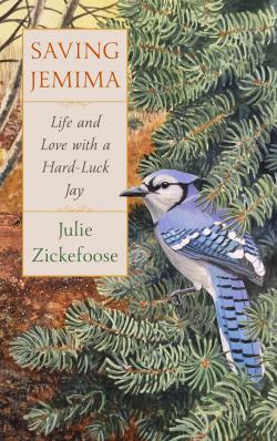 Hard Luck Jay by Julie Zickefoose